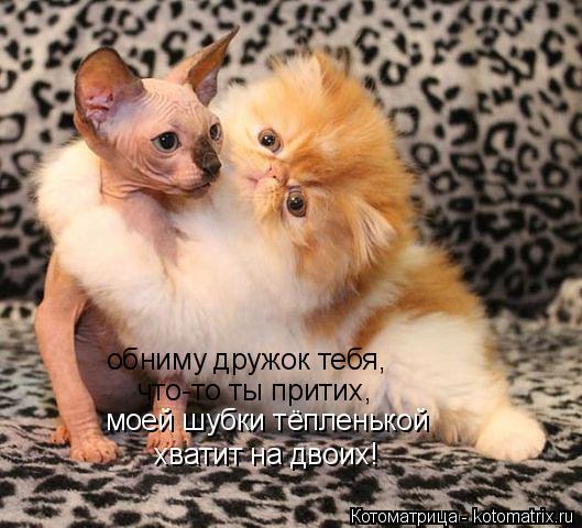 Котоматрица: обниму дружок тебя, что-то ты притих, моей шубки тёпленькой хватит на двоих!