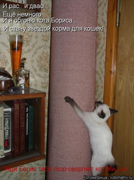 Котоматрица: И рас.. и двас! Ещё немного... И я обгоню кота Бориса... И стану звездой корма для кошек! Жди Борис тебя скор свергнет кот Мишка