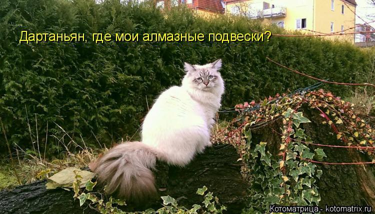 Котоматрица: Дартаньян, где мои алмазные подвески?