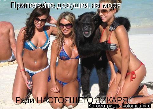 Котоматрица: Прилетайте,девушки,на моря  Ради НАСТОЯЩЕГО ДИКАРЯ!