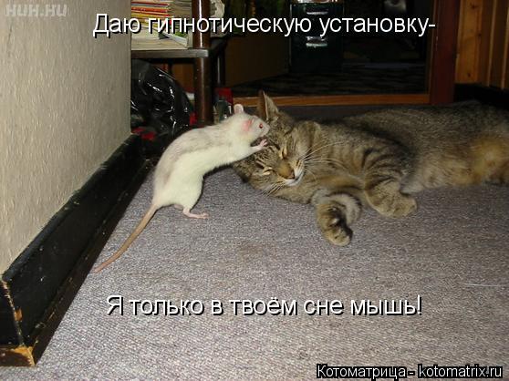 Котоматрица: Даю гипнотическую установку- Я только в твоём сне мышь!