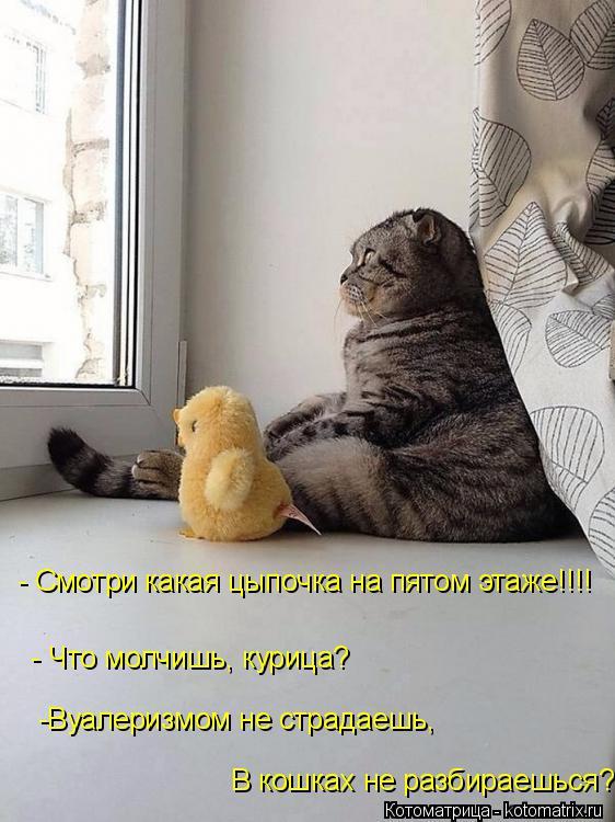 Котоматрица: - Смотри какая цыпочка на пятом этаже!!!! - Что молчишь, курица?  -Вуалеризмом не страдаешь,   В кошках не разбираешься?