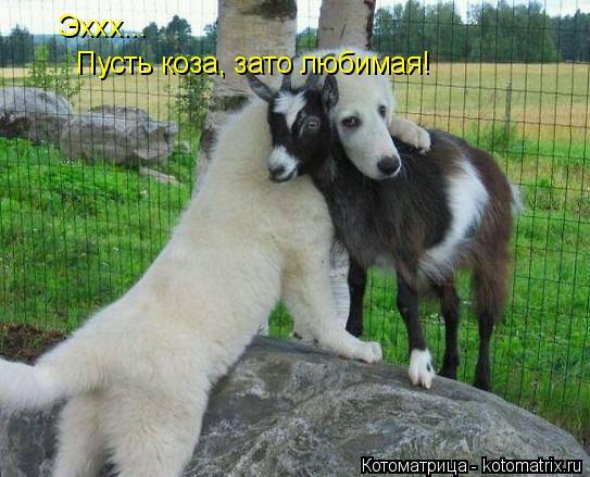 Котоматрица: Эххх...  Пусть коза, зато любимая!