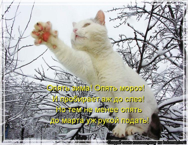Котоматрица: Опять зима! Опять мороз! И пробирает аж до слез! Но тем не менее опять до марта уж рукой подать!