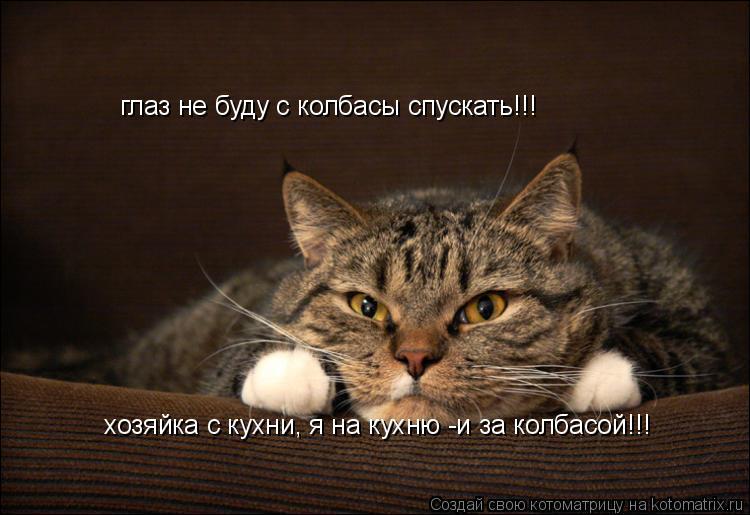 Котоматрица: глаз не буду с колбасы спускать!!! хозяйка с кухни, я на кухню -и за колбасой!!!