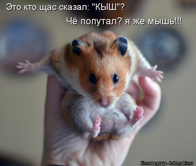 "Котоматрица: Чё попутал? я же мышь!!! Это кто щас сказал: ""КЫШ""?"