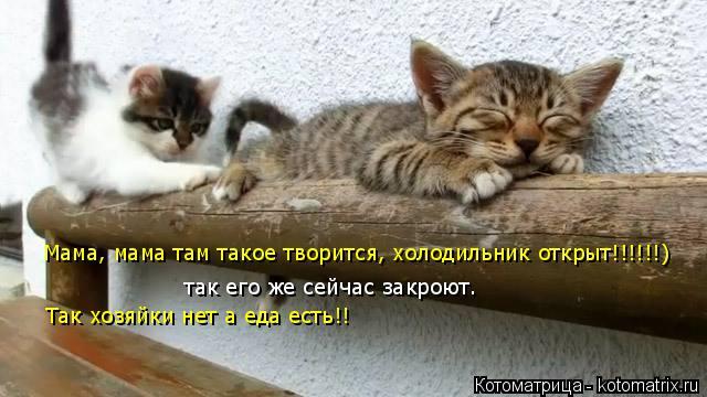 Котоматрица: Мама, мама там такое творится, холодильник открыт!!!!!!) так его же сейчас закроют. Так хозяйки нет а еда есть!!