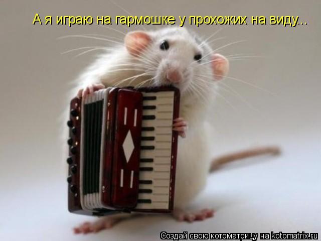 Котоматрица: А я играю на гармошке у прохожих на виду...