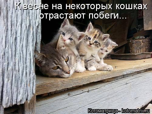 Котоматрица: К весне на некоторых кошках  отрастают побеги...