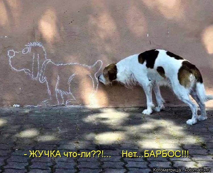 Котоматрица: - ЖУЧКА что-ли??!...    Нет...БАРБОС!!!