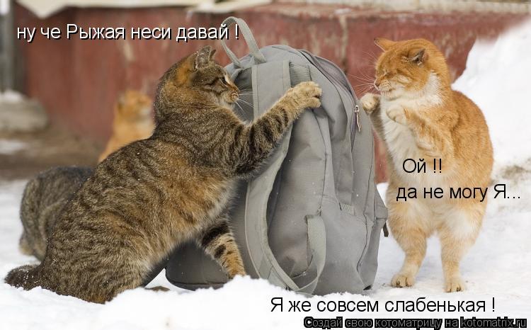 Котоматрица: ну че Рыжая неси давай ! да не могу Я... Ой !! Я же совсем слабенькая !