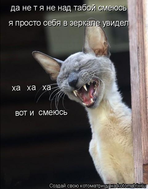 Котоматрица: да не т я не над табой смеюсь я просто себя в зеркале увидел вот и  смеюсь ха   ха   ха