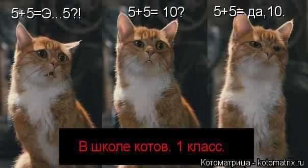 Котоматрица: 5+5=Э...5?! В школе котов. 1 класс. 5+5= 10? 5+5= да,10.