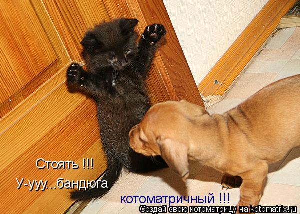 Котоматрица: Стоять !!! У-ууу...бандюга котоматричный !!!