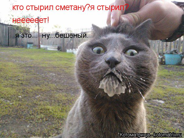 Котоматрица: кто стырил сметану?я стырил? неееееет! я это...  ну...бешеный.