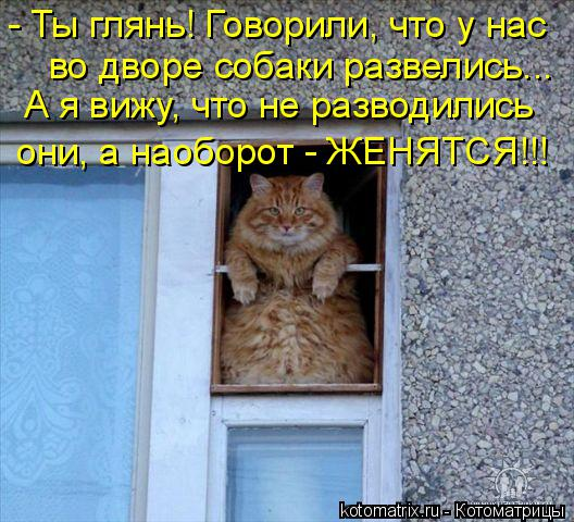 Котоматрица: - Ты глянь! Говорили, что у нас во дворе собаки развелись... А я вижу, что не разводились они, а наоборот - ЖЕНЯТСЯ!!!
