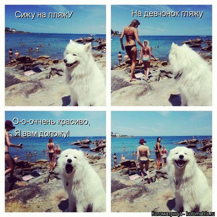 Котоматрица: Сижу на пляжУ На девчонок гляжу О-о-оччень красиво, Я вам доложу!