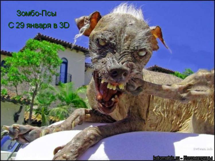 Котоматрица: Зомбо-Псы С 29 января в 3D