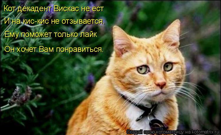 Котоматрица: Кот декадент Вискас не ест И на кис-кис не отзывается. Ему поможет только лайк Он хочет Вам понравиться.