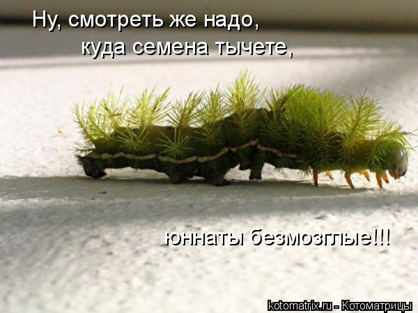 Котоматрица: Ну, смотреть же надо, куда семена тычете, юннаты безмозглые!!!