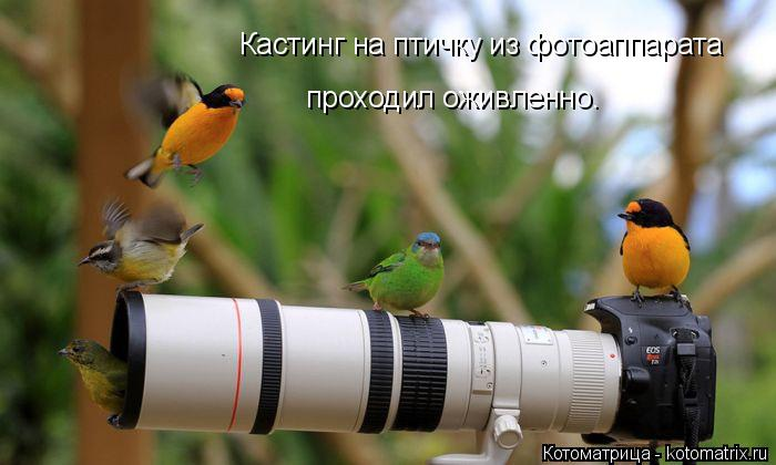 Котоматрица: Кастинг на птичку из фотоаппарата  проходил оживленно.