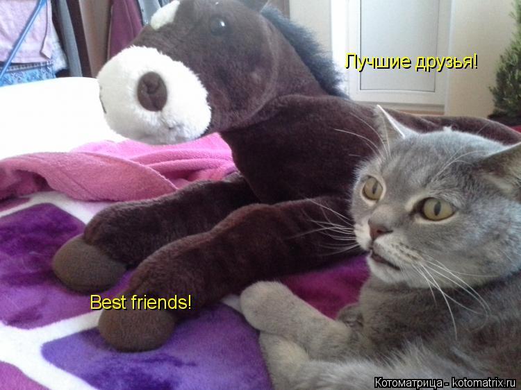 Котоматрица: Лучшие друзья! Best friends!