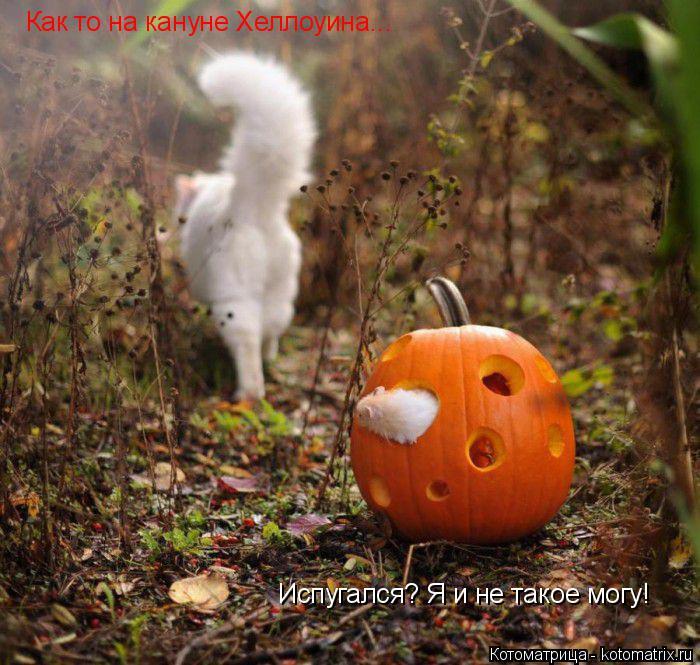 Котоматрица: Как то на кануне Хеллоуина... Испугался? Я и не такое могу!
