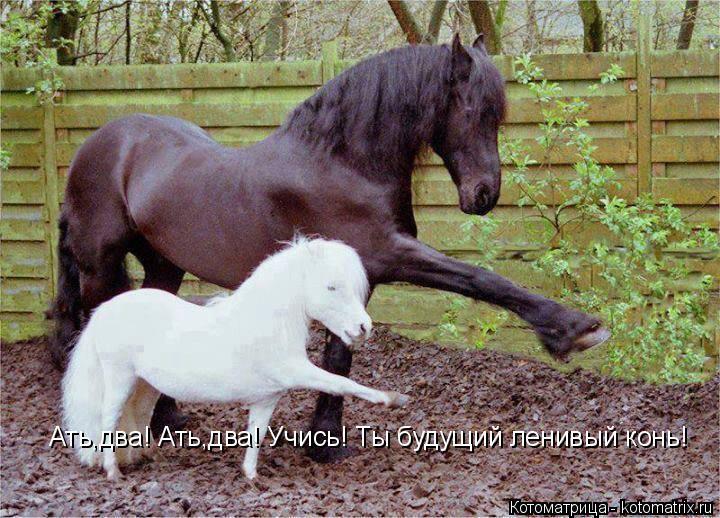 Котоматрица: Ать,два! Ать,два! Учись! Ты будущий ленивый конь!