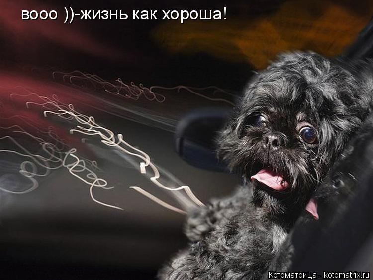Котоматрица: вооо ))-жизнь как хороша!
