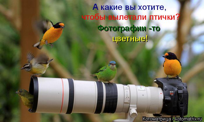 Котоматрица: А какие вы хотите,   чтобы вылетали птички? цветные! Фотографии -то