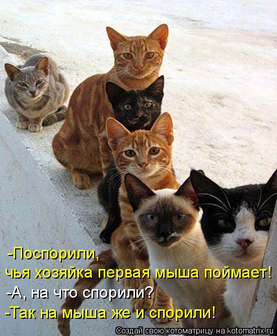 Котоматрица: -Поспорили,  чья хозяйка первая мыша поймает! -А, на что спорили? -Так на мыша же и спорили!