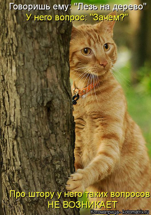 """Котоматрица: Говоришь ему: """"Лезь на дерево"""" У него вопрос: """"Зачем?"""" Про штору у него таких вопросов НЕ ВОЗНИКАЕТ"""