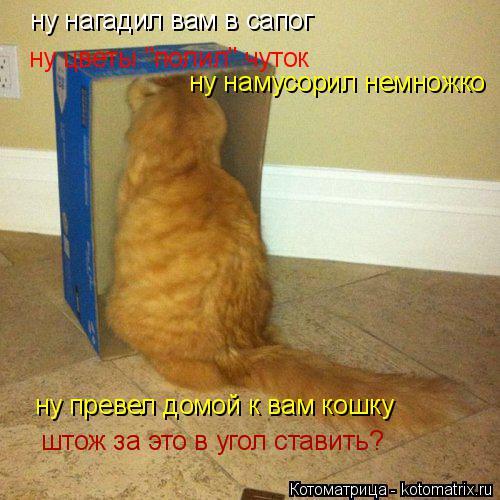 """Котоматрица: ну нагадил вам в сапог ну цветы """"полил"""" чуток ну намусорил немножко ну превел домой к вам кошку штож за это в угол ставить?"""