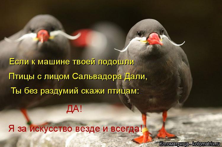 Котоматрица: Если к машине твоей подошли Птицы с лицом Сальвадора Дали, Ты без раздумий скажи птицам:  ДА! Я за искусство везде и всегда!