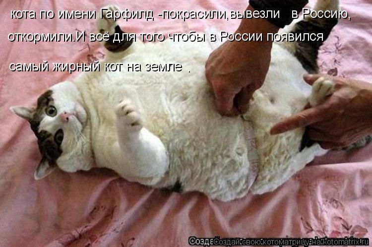 Котоматрица: кота по имени Гарфилд -покрасили,вывезли   в Россию, откормили.И всё для того чтобы в России появился самый жирный кот на земле .