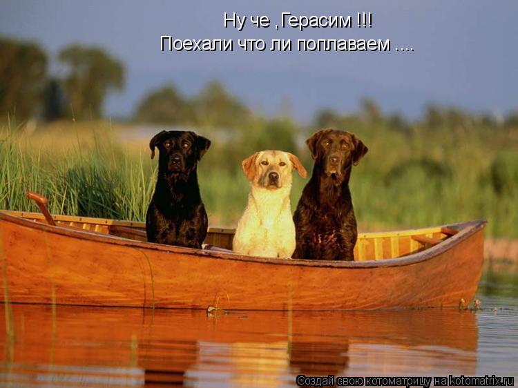 Котоматрица: Ну че ,Герасим !!! Поехали что ли поплаваем ....