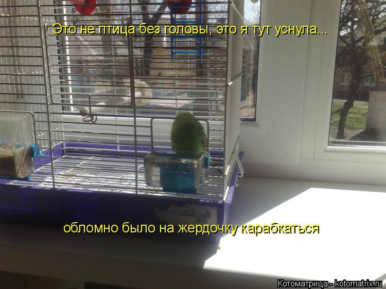 Котоматрица: Это не птица без головы, это я тут уснула... обломно было на жердочку карабкаться