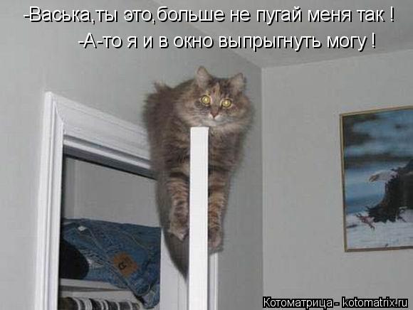 Котоматрица: -Васька,ты это,больше не пугай меня так ! -А-то я и в окно выпрыгнуть могу !