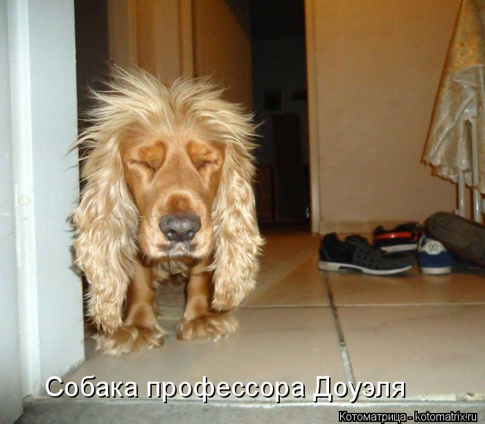 Котоматрица: Собака профессора Доуэля