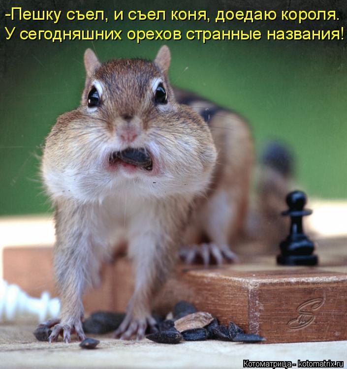 Котоматрица: -Пешку съел, и съел коня, доедаю короля. У сегодняшних орехов странные названия!