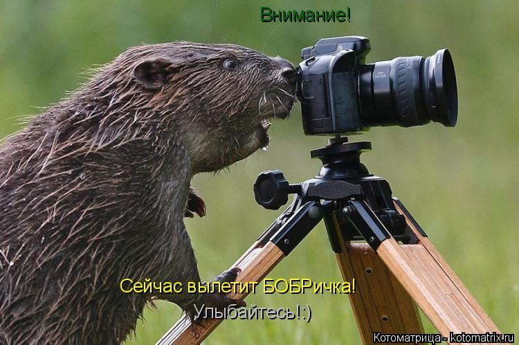 Котоматрица: Внимание! Сейчас вылетит БОБРичка! Улыбайтесь!:)