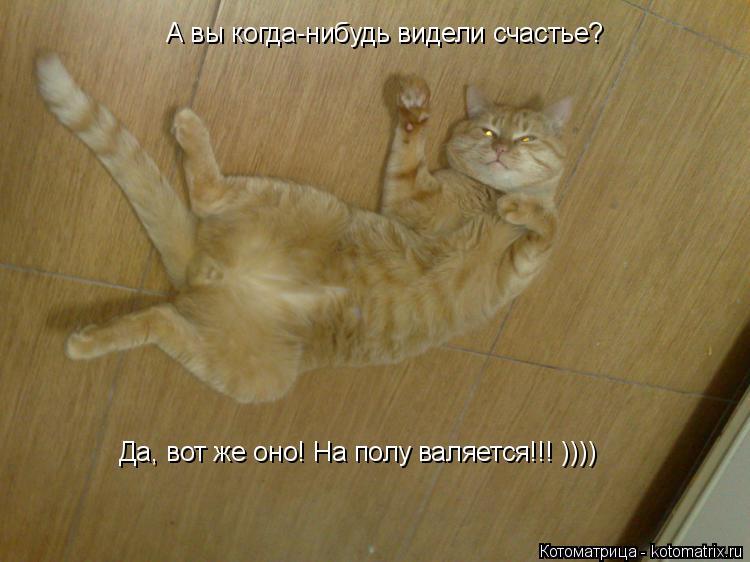 Котоматрица: А вы когда-нибудь видели счастье? Да, вот же оно! На полу валяется!!! ))))