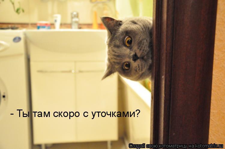 Котоматрица: - Ты там скоро с уточками?