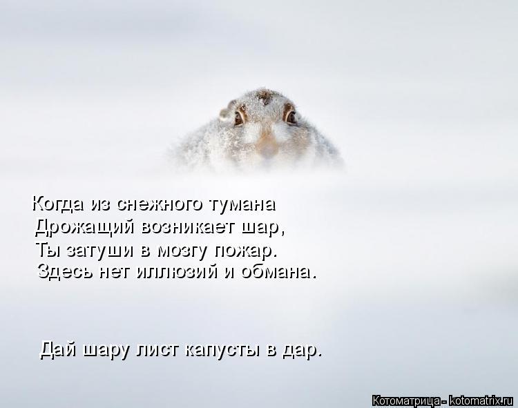 Котоматрица: Когда из снежного тумана Дрожащий возникает шар, Ты затуши в мозгу пожар. Здесь нет иллюзий и обмана. Дай шару лист капусты в дар.
