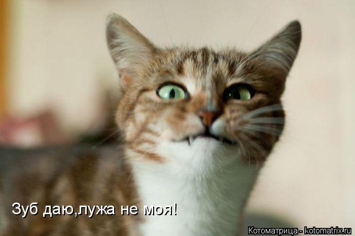 Котоматрица: Зуб даю,лужа не моя!