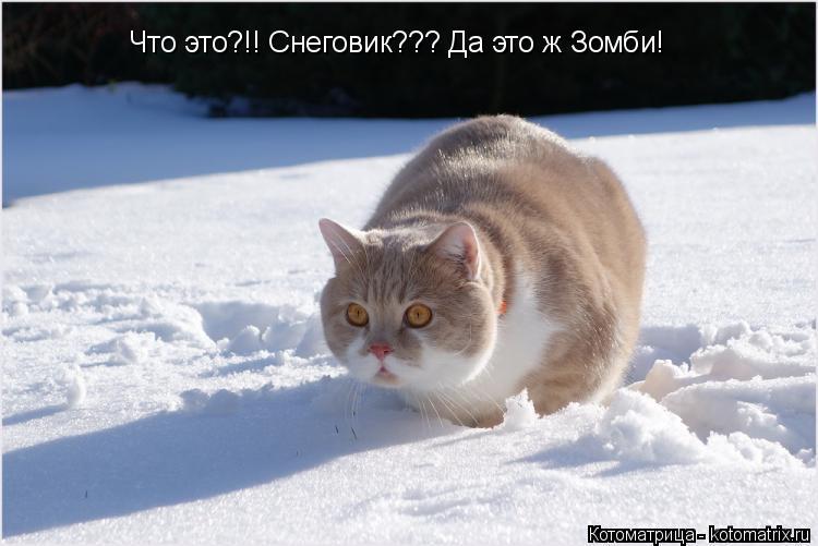 Котоматрица: Что это?!! Снеговик??? Да это ж Зомби!