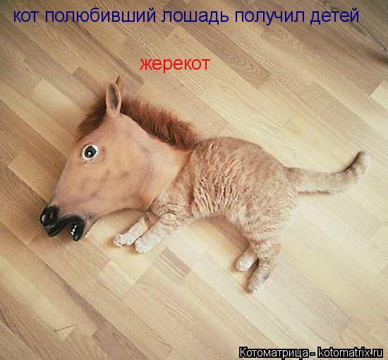 Котоматрица: кот полюбивший лошадь получил детей жерекот