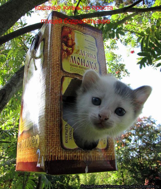 Котоматрица: кошачья жизнь не проста птицей бодрабатываю