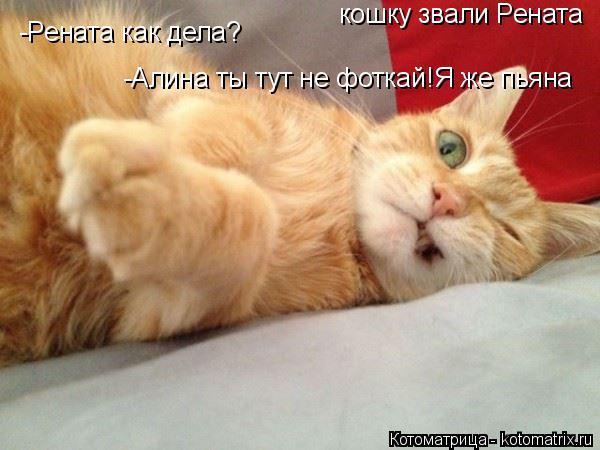 Котоматрица: кошку звали Рената -Рената как дела? -Алина ты тут не фоткай!Я же пьяна
