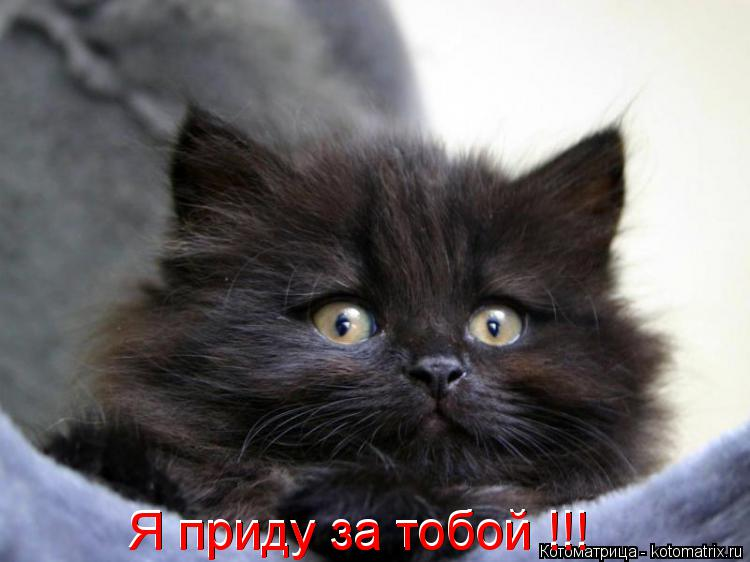 Котоматрица: Я приду за тобой !!! Я приду за тобой !!!